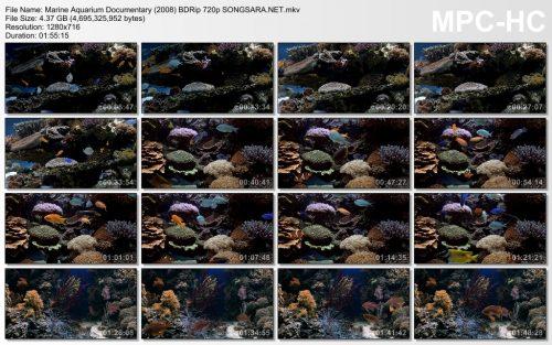 marine-aquarium-documentary-2008-bdrip-720p