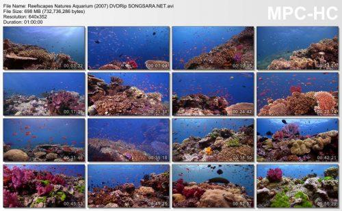 reefscapes-natures-aquarium-2007