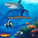 The Best Aquarium for Relaxation (2017)