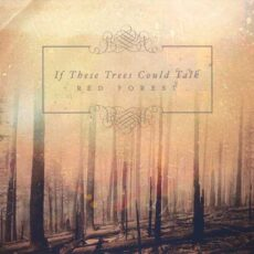 If These Trees Could Talk - Red Forest