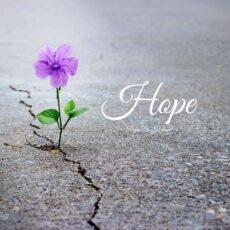 Peder B. Helland Hope