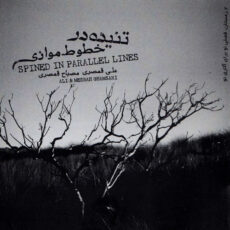 Ali Ghamsari, Mesbah Ghamsari Spined in Parallel Line