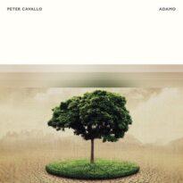 Peter Cavallo Adamo