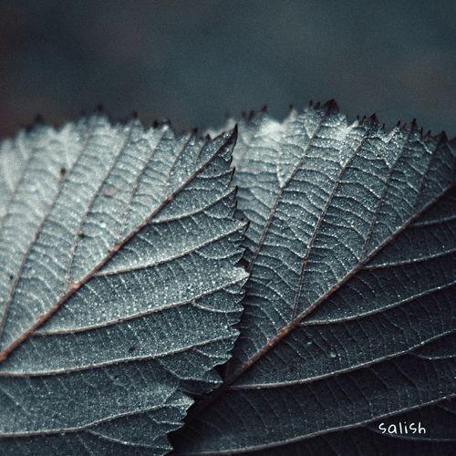 Czarina Frost Salish