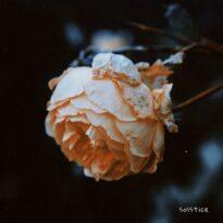 Czarina Frost Solstice