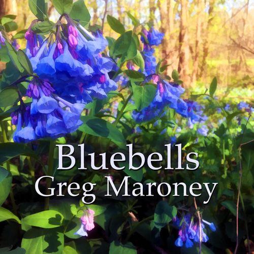 Greg Maroney Bluebells