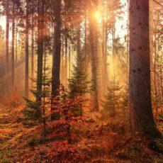 Brock Hewitt, The David Roy Collective - Autumn Woods
